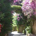 Bormes Passage fleuri