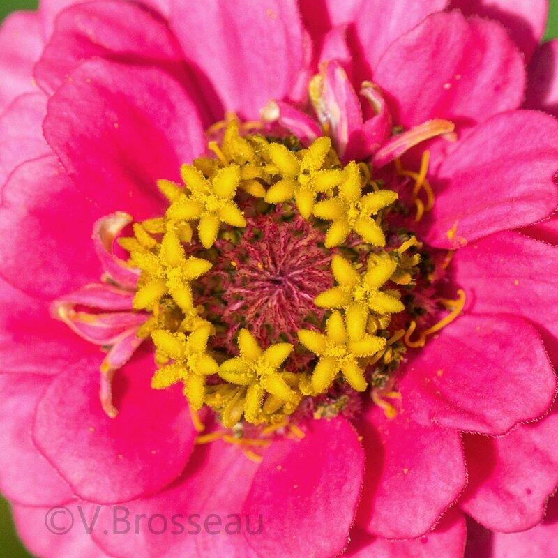 coeur-fleur14-05