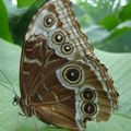 Butterfly (179)