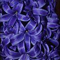 Je vois la vie en violet #7