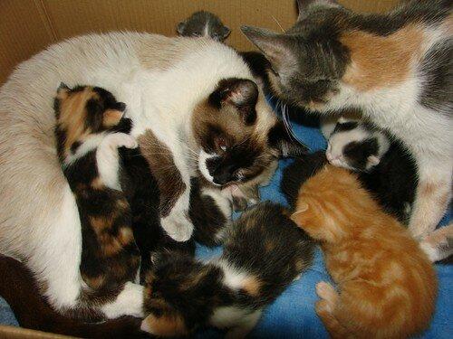 2008 03 31 Papillon et Blanco et leurs chatons