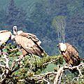 vautours 3