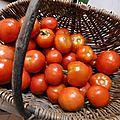 tomates d'automne - www.passionpotager.canalblog.com