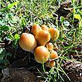 champignon-05714