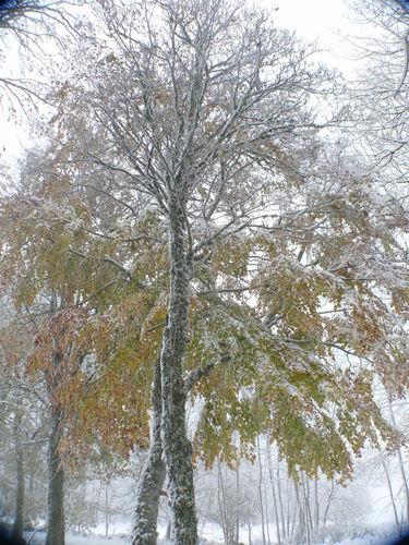 2008 10 29 Les feuilles ne sont pas tombés mais le givre et la neige sont arrivés