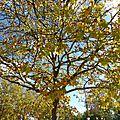405 - automne aux mille couleurs