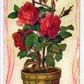 mail yanika pot roses