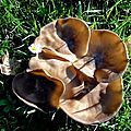 champignon-05884 (2)