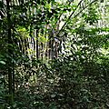 foret 2 IMG_20170902_104310