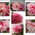 fleurs fanee2