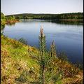 Äänet - Aquarian Forest