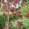 Le jardin en automne.