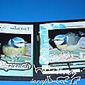 Les oiseaux en hiver - un mini