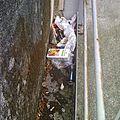 ordures (4)