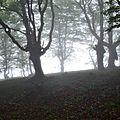 Couvert de hêtre dans le brouillard au Serròt de Boish.
