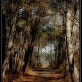 le val de l'eyre,l'arbre et la forêt