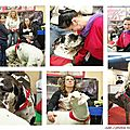 Salon chiens/chats 2013