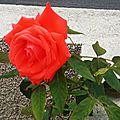 Fleurs de Leon 24061632