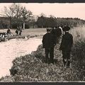 SOLOGNE 1920 Equipage de Cheverny Archives Maul-on 005