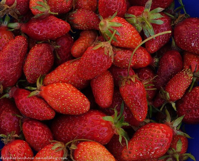 mi mai fraises