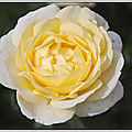 Je vous offre un bouquet de roses...