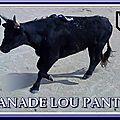 MANADE LOU PANTAI