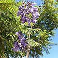 fleurs mauves4jpg