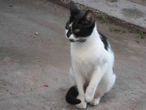 chat Trogir 5