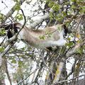 2009 05 11 Blanco qui grimpe dans les branches