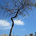 <b>Port</b> vell : le vieux <b>port</b> de <b>Barcelone</b> le 29 avril 2014 (4)