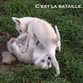 Ultimate fighting PUPPIES