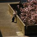 magnolias au carré
