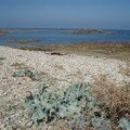 la plage au port du Hâble
