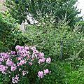 314 un peu du jardin