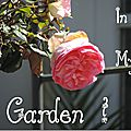 Windows-Live-Writer/Dams-mon-jardin_C73C/DSCN1302_thumb