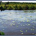Lac 01091531