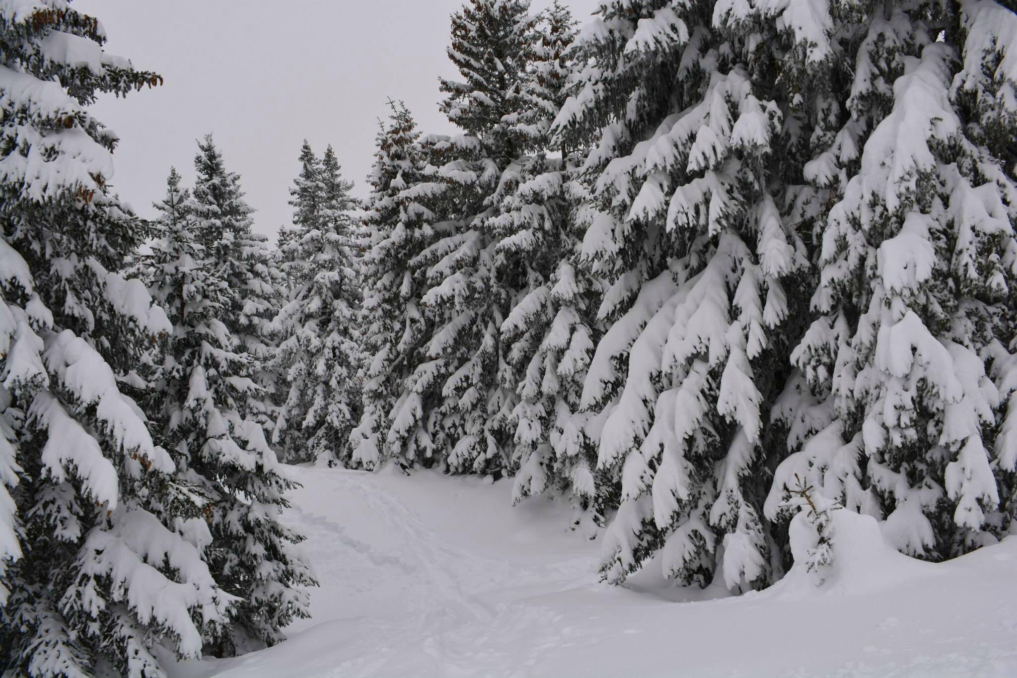 Projet 52#10-2015#C'est l'hiver