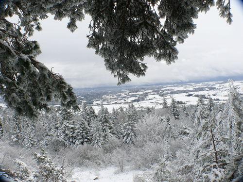 2008 10 30 Branche d'arbre et paysage enneigés