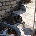 Gestion de l'ombre en mode chat