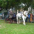 <b>Fête</b> du cheval Boulonnais - Boulogne sur Mer