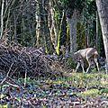 Jeune couple dans les bois ....