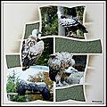 Pairi daiza 2014 - vautours et autres rapaces