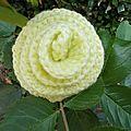 Une rose épanouie jaune pâle