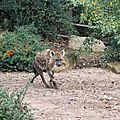 Amneville zoo 5