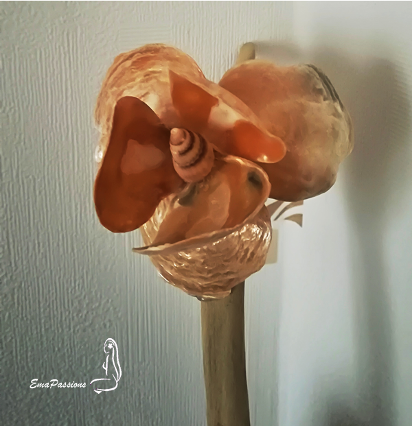 orchidée-coquillage