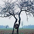 Incrustation dans un arbre_Land art_Andy Goldsworthy