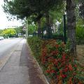 IMG_5691 promenade urbaine !!!