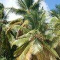 cocotiers-salines