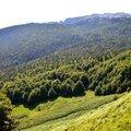 La forêt d'Issaux depuis le Guilhers...
