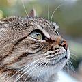 Passion chats... pensée de théophile gautier